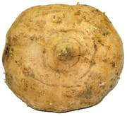 Turnip (Bang Kwang)