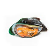 Fresh Green Mussel