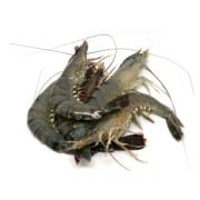 Frozen Thawed Tiger Prawn Extra Large