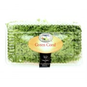 Green Coral In Clam